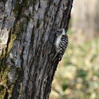 バードウォッチングの季節 Bird watching season