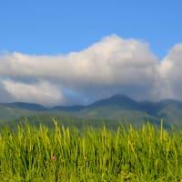モーニング精米は、八ヶ岳を望みながら。
