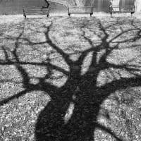木の影を見て思うこと