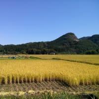 秋の収穫祭<稲刈り・脱穀・新米たんぽ会> 森のテラス主催イベント