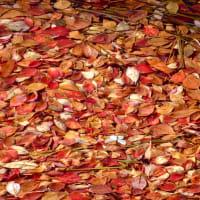 水面紅葉の白駒池。