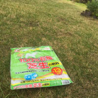 最近、ハマっている芝生の草取り