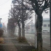 20-02-23 暴風雪警報