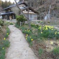庭で咲いた小っちゃなお花4種です