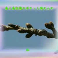 『 歓びを返す喜び木の芽風 』言葉あそび575交心ypy1402