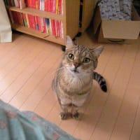 猫の日なんだからサービスを期待していいんですよねえ・・・