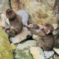 野猿公苑 (長野県) 2019.8.15