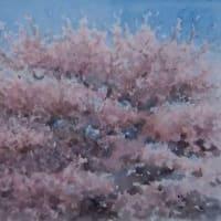 想い出めくり№9「蓬莱桜」(防府市向島)