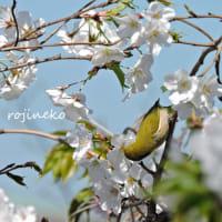 春を待つ鳥たち