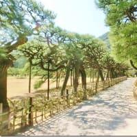 伊予の国 新居浜の住人から春の便りが届いた   栗林公園篇             シリーズその1