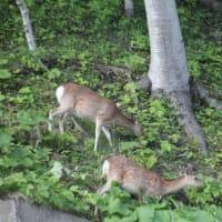 フォト旅日記zqt2001トピック『 鹿 』
