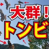 ラディアルレイズ ネイチャーラディ 動画アップロード!