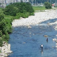 越後湯沢魚野川鮎、2回目の遠征へ