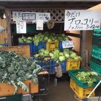1回目の野菜が揃いました。