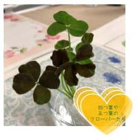 ■幸福の四つ葉のクローバー🍀
