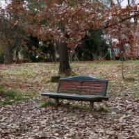 冬の実たち~京都府立植物園2020年1月(4)