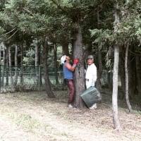 杉の森の大掃除