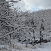 久しぶりの雪に車山スノーロードをドライブする。