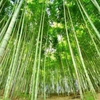 間伐竹やぶ会議2020。