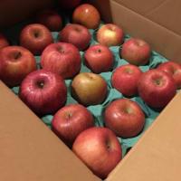 「フクシマン土屋」から贈られた「福島県産のリンゴ(林檎)」さあ、その実力は?