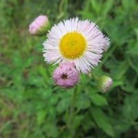 野の花を見なさい