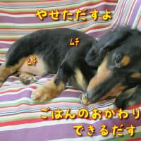 犬のダイエットは難しい(-_-;)
