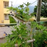 亀山公民館「ゆずりは」