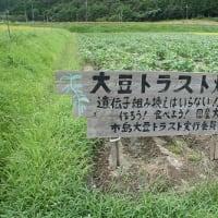 大豆畑トラスト運動にいっしょに参加しませんか!