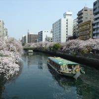 「桜まつり」/大岡川(2019春)