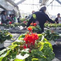 金農祭で、花を買う。