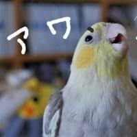 はいチーズ!の日(8月22日)