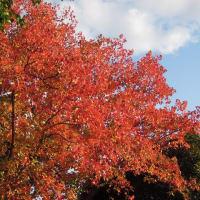 マッキーの『四季を楽しむ』:続々・ 季節を感じる日常の風景