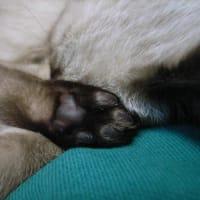 ネコの肉球