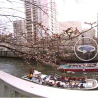 目黒川の5分咲き桜より、遊覧船の方が面白かった