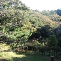 鎌倉中央公園にも秋が来た