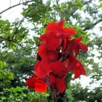 公園の、その他の花たち