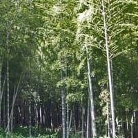 笹の葉サラサラ 軒端に揺れる