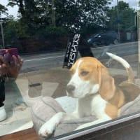 床屋の招き犬
