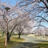 2020.04.03_福島市渡利・茶臼森散策