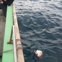 タイ・根魚釣り