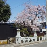 長井まちなか桜回廊 お誘い8