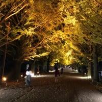 昭和記念公園のナイトショーが綺麗だった!