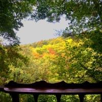 そろそろ赤み差す午後の森渓谷。