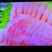 5/27 Dashすごいエイのコラーゲン  うまく売ればもうかる魚