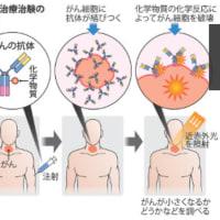 光免疫療法:近赤外線で がん細胞が死滅・「がん光免疫療法」の開発者・小林久隆医師