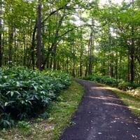 夏の癒し歩道