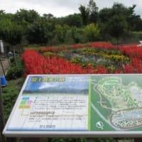 やって来たのは富士山北麓のワンダーランド