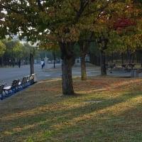 朝のぶらぶらフォト 鶴見緑地 大池のカモ達(11月16日版)