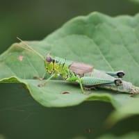 葉上の虫達2