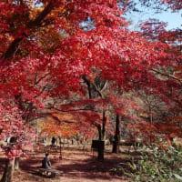 長瀞の紅葉も終盤へ 2020/11/24